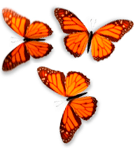 Butterfly On Desktop